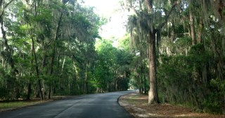 did you know that spanish moss is an epiphyte that's not parasitic and doesn't hurt the trees? (erin: 1; clyde: 0)
