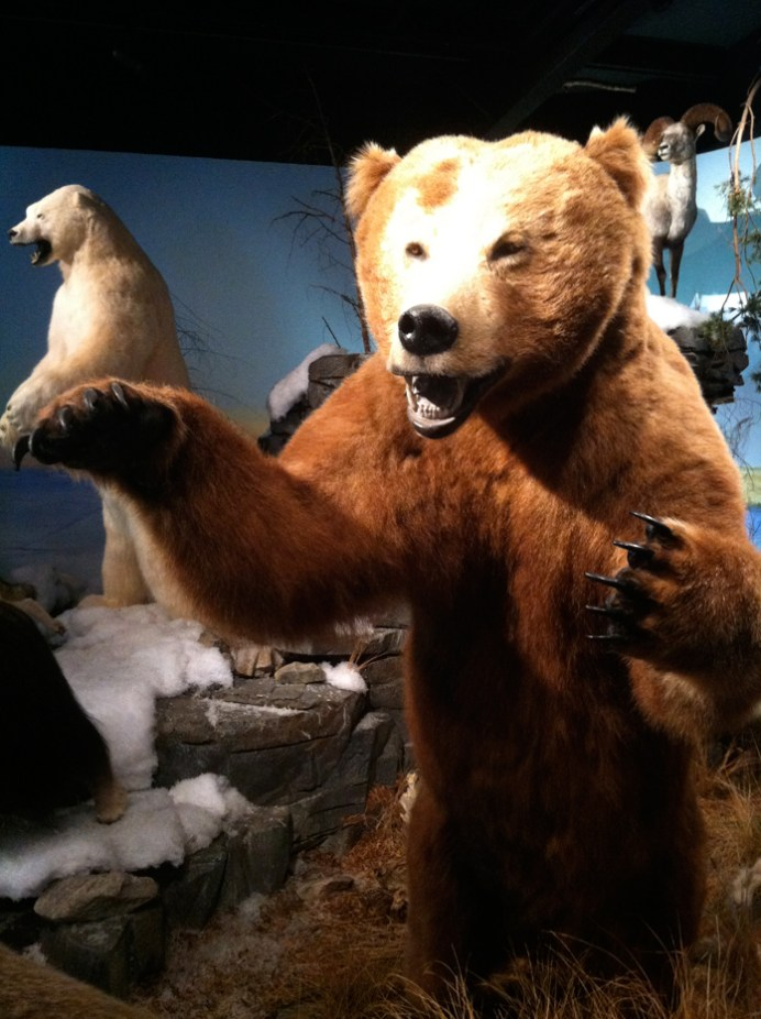 """""""save the wilderness"""" signs next to dozens of stuffed wild animals sends mixed signals."""