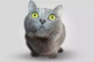 southeast melbourne cat clinic