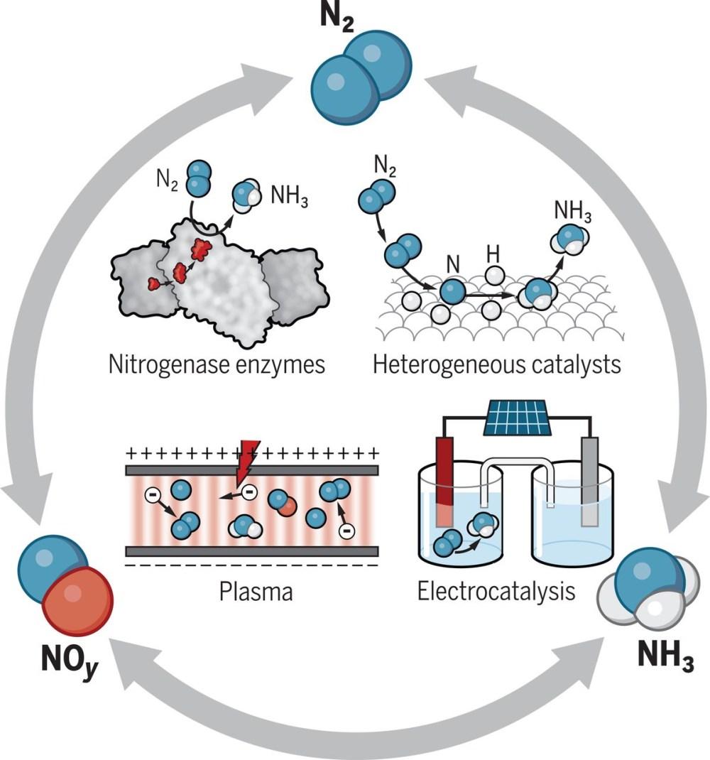 medium resolution of nitrogen fixation routes