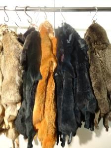 peau de marmotte