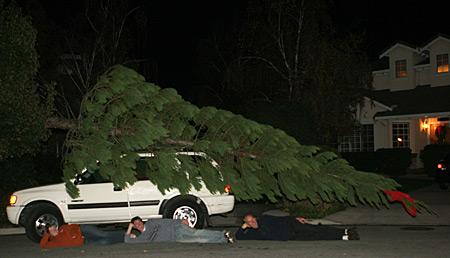 Insane Christmas Tree