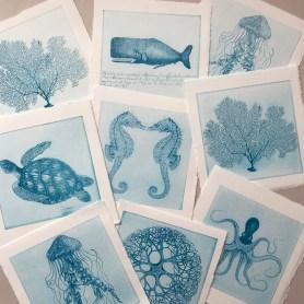 Sealife Series_8_8_aqua