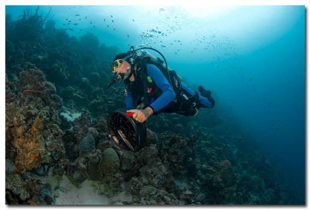 Barry McMahon diving in Bonaire.