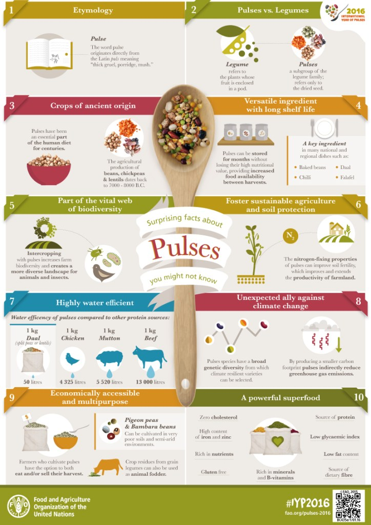 International Year of Pulses-Pulses Facts infographic
