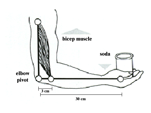 Knee Diagram Project, Knee, Free Engine Image For User
