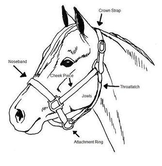 Upper Respiratory Surgeries in Horses