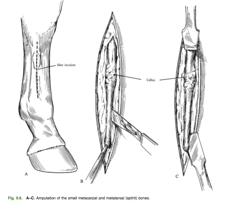 Lab 5 Equine Limb Immobilization & Bandaging
