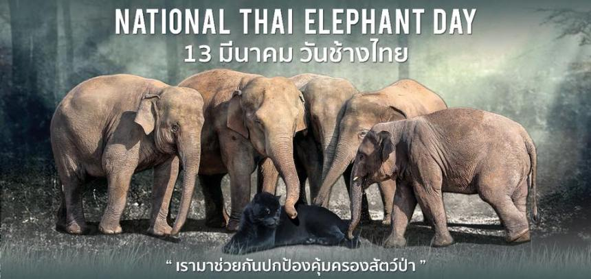 ThaiElephantDay2018ENPCoverFB