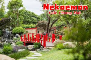 Nekoemon Cafe Photo Hallo Chiangmai