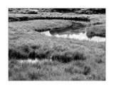 Paderna flooded meadows