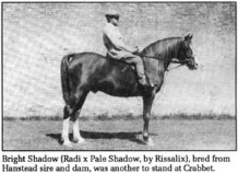 Bright Shadow (Radi x Pale Shadow, by Rissalix), bred from Hanstead sire and dam, was another to stand at Crabbet