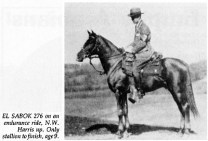 EL SABOK 276 on an endurance ride, N.W. Harris up. Only stallion to finish, age 9.