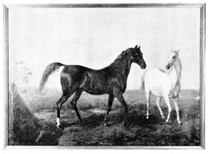 Feysul and Lulie Feysul ch. s foaled 1852. 14 3/4 hands imp. 1856 by A. Keene Richards