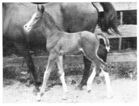 July colt at 2 days ex Ramnada by Damascus Ramnada is for sale. Contact Mrs. Richard P. Davis, Prly Hill Rd., Sanbornton, N.H.