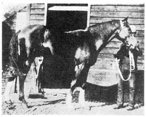*Kismet 253 foaled in 1877 15 hands.