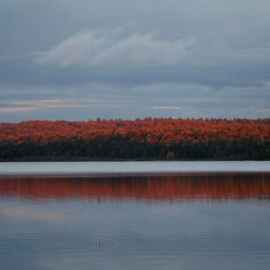 Mouse Lake trees in fall colours