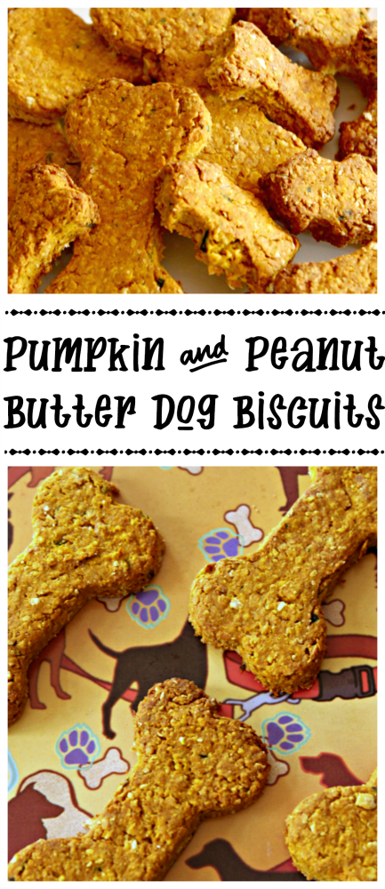 If my dog is any indication, yours will absolutely love these homemade pumpkin peanut butter dog biscuits - only four ingredients and SO easy to make!