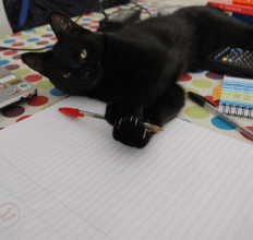 Picture cat writing