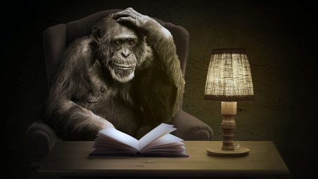 A monkey sits at a desk and reads a book by lamplight