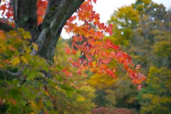 Fall on the Trees