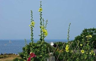 Isle of Shoals Celia's Garden