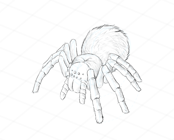 How To Draw Spiders Step 4