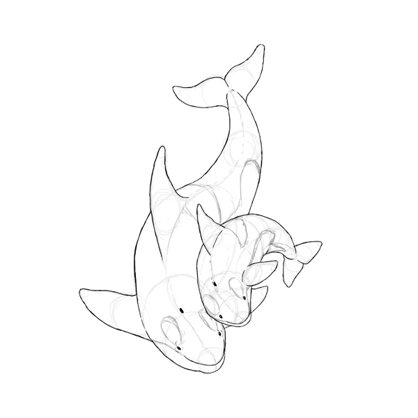 How to Draw Animals: Dolphins, Whales, and Porpoises