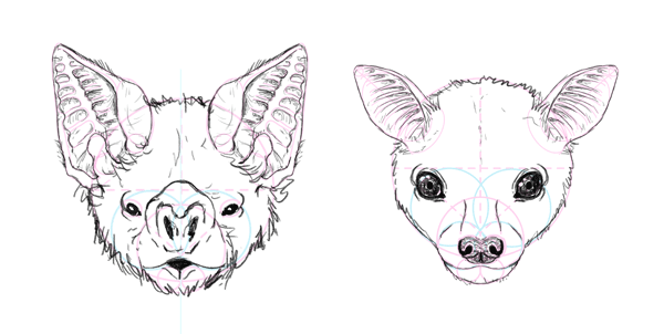 How to Draw Animals: Bats