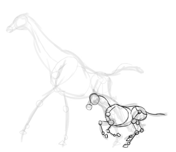 How to Draw Animals: Zebras and Giraffes