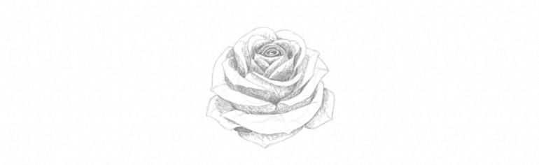 how to plan shading rose