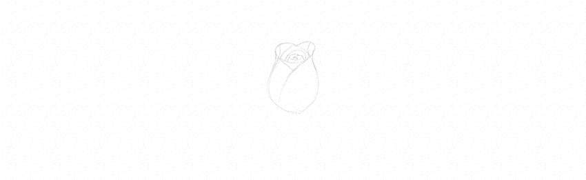 rose sketching