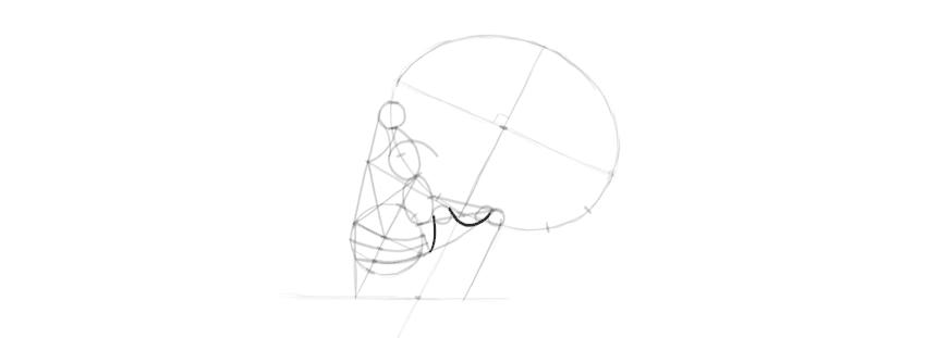 desenho da forma do crânio da mandíbula