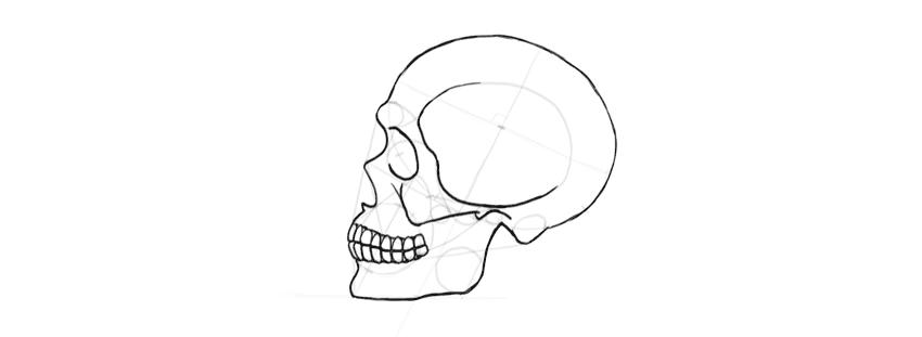 Como desenhar um crânio humano