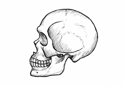 How to Draw a Skull in Profile, Step by Step