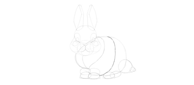 bunny body curve