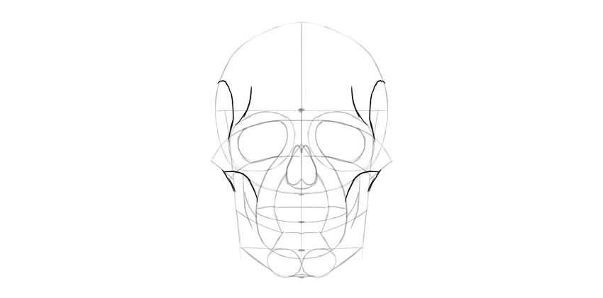 detalhe do lado do crânio humano