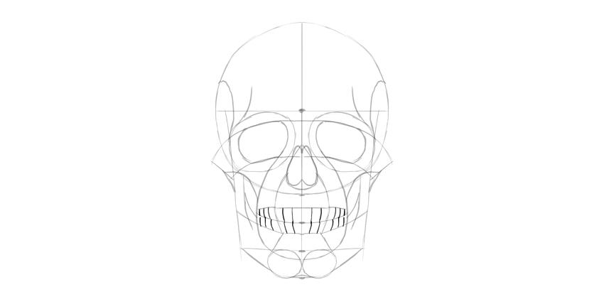 dentes do crânio humano