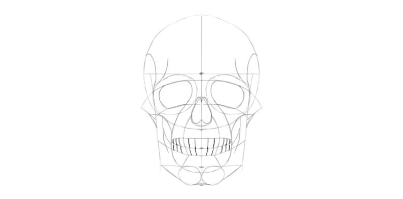 human skull teeth