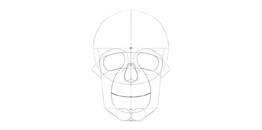 curva do sorriso do crânio humano