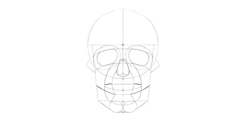 human skull jaws line