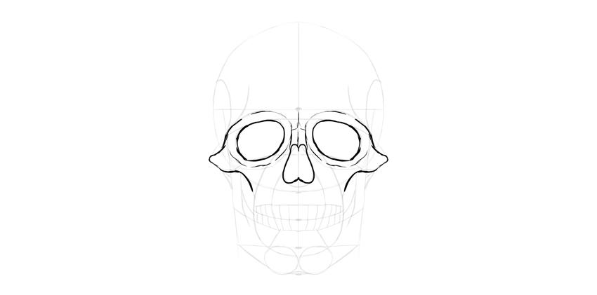 contorno de olhos de crânio humano