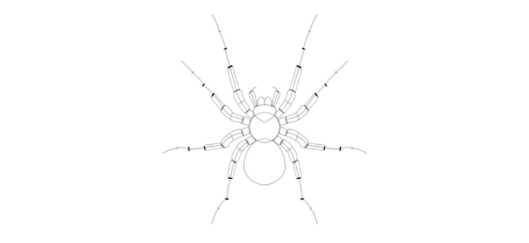 spider drawing leg segment