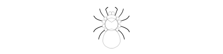 spider drawing palps short legs