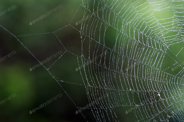 spider web photo green background