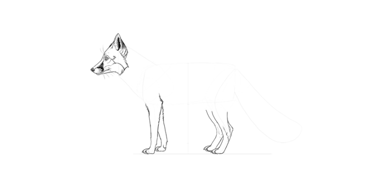 draw fox hind legs