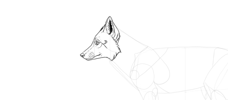 draw fur on fox face