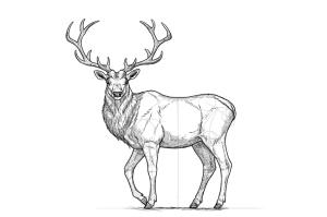 deer draw drawing easy step head elk buck reindeer line drawings sketches animal getdrawings illustration forest