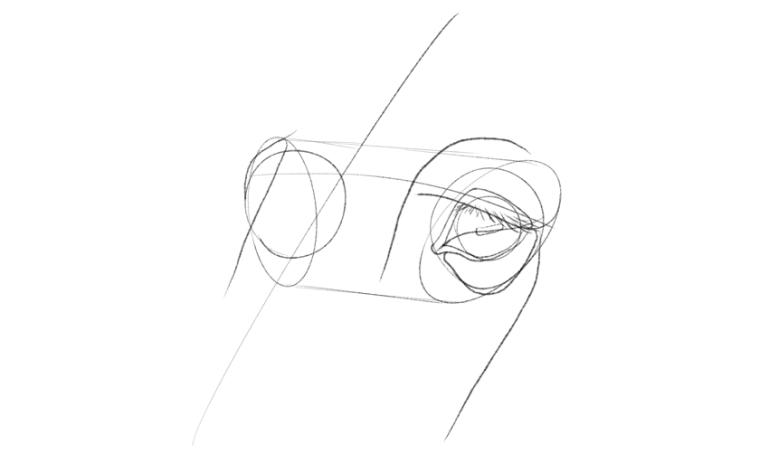 horse cheek drawing