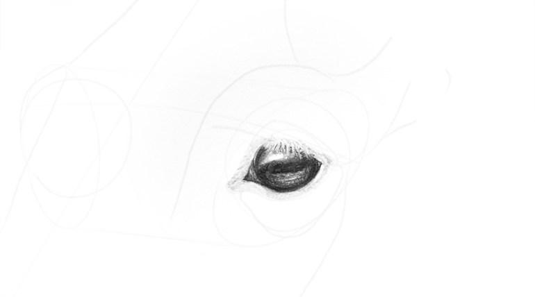 horse eye membrane shading